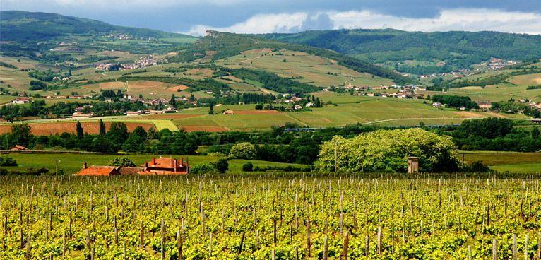 image-page-route-des-vins